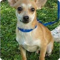 Adopt A Pet :: Charlie - P, ME