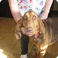 Adopt A Pet :: Rose Red - Milford, CT