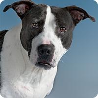 Adopt A Pet :: Jennie - Houston, TX