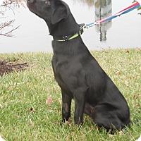 Adopt A Pet :: Hemi - Lewisville, IN