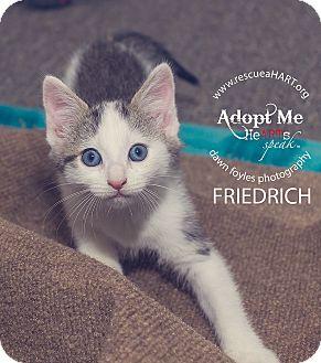 Domestic Shorthair Kitten for adoption in Cincinnati, Ohio - friedrich
