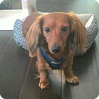 Adopt A Pet :: Rowan - Decatur, GA