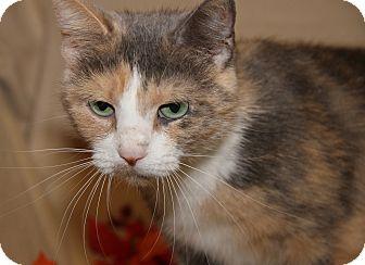 Domestic Shorthair Cat for adoption in Marietta, Ohio - Jasmine (Spayed)-Update