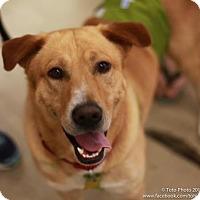 Adopt A Pet :: Marley Dean - DeSoto, IA