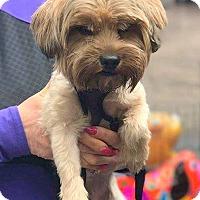 Adopt A Pet :: Mercerville, NJ - Mylo - New Jersey, NJ