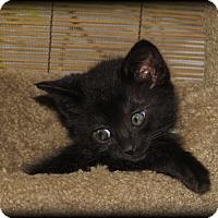 Adopt A Pet :: Simba - Somerset, KY