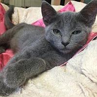 Adopt A Pet :: Lomein - Bensalem, PA