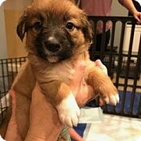 Adopt A Pet :: Lucy Schultz - Alpharetta, GA