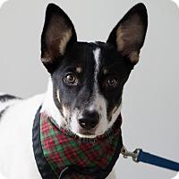 Adopt A Pet :: Fiesta - Calgary, AB
