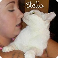 Adopt A Pet :: Stella - York, PA