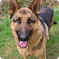Adopt A Pet :: Duke - Chester Springs, PA