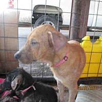 Adopt A Pet :: A292673 - Conroe, TX