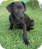 Labrador Retriever Mix Dog for adoption in Hagerstown, Maryland - Sparrow