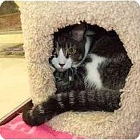 Adopt A Pet :: Cameron - Fort Lauderdale, FL