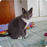 Adopt A Pet :: Abby - Syracuse, NY