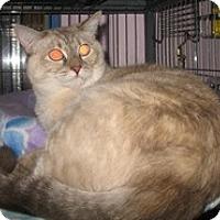 Adopt A Pet :: Angela - Shelton, WA