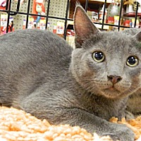 Adopt A Pet :: Trey - The Colony, TX