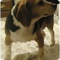 Adopt A Pet :: Shirley - Beachwood, OH