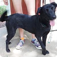 Adopt A Pet :: *Kayla - PENDING - Westport, CT