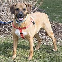 Adopt A Pet :: Snapdragon - Kl Litter - Livonia, MI