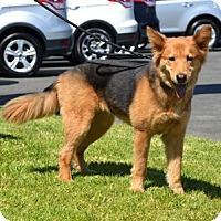 Adopt A Pet :: Moxie - Irvine, CA
