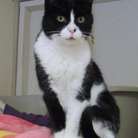 Adopt A Pet :: Clara - Westville, IN