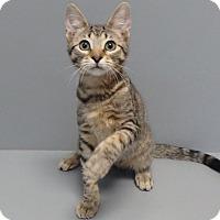 Adopt A Pet :: Loki - Seguin, TX
