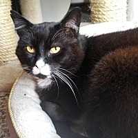 Adopt A Pet :: Owen Wilson - Vancouver, BC