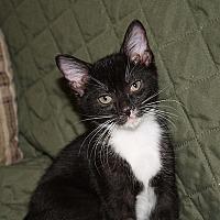 Adopt A Pet :: Charity - Tampa, FL