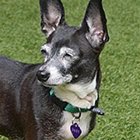 Adopt A Pet :: Baby 224233 - Petaluma, CA