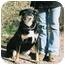 Photo 1 - German Shepherd Dog/Rottweiler Mix Dog for adoption in California City, California - Dutchess