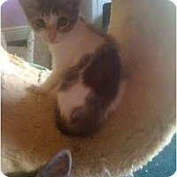 Adopt A Pet :: Dorie - Mobile, AL