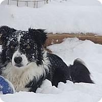 Adopt A Pet :: Pete - Denver, CO