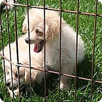 Adopt A Pet :: Ali - Garden Grove, CA