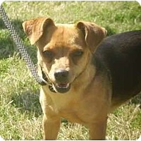 Adopt A Pet :: Mercy - Adamsville, TN
