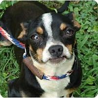 Adopt A Pet :: Rocky - Plainfield, CT