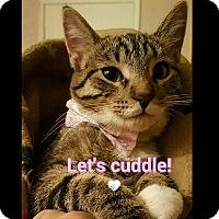 Adopt A Pet :: Mitzie - San Fernando Valley, CA