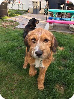 Terrier (Unknown Type, Medium) Mix Puppy for adoption in Sagaponack, New York - Mattie
