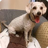 Adopt A Pet :: Pretty Boy - Phoenix, AZ