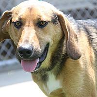 Adopt A Pet :: Louie - Marietta, OH