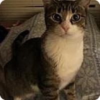Adopt A Pet :: Colorado - Parlier, CA