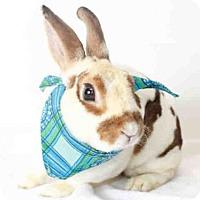 Adopt A Pet :: PAUL BUNNYAN - San Pedro, CA