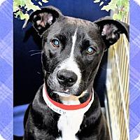 Adopt A Pet :: Lizzie - San Jacinto, CA