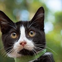 Adopt A Pet :: Edith - Murfreesboro, NC