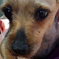 Adopt A Pet :: Morse - DAYTON, OH