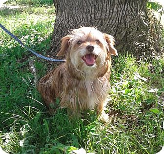 Terrier (Unknown Type, Small) Mix Dog for adoption in Madison, Wisconsin - Reecee (ETAA)