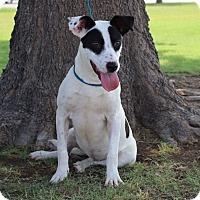 Adopt A Pet :: Gary - Middlebury, CT