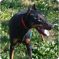Adopt A Pet :: Shai--adopted! - New Richmond, OH