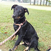 Adopt A Pet :: Priscilla - Adamsville, TN