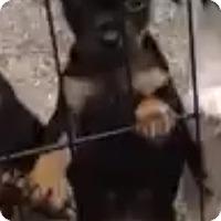 Adopt A Pet :: Napolean - Staunton, VA